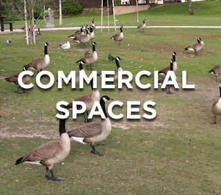 Keeping Geese From Commercial Properties
