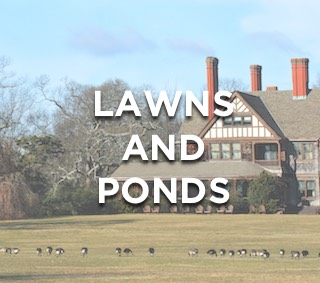 Keeping Geese From Residential Lawns, Ponds, and Lakes